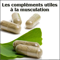 Informations sur musculation programmes for Complement musculation