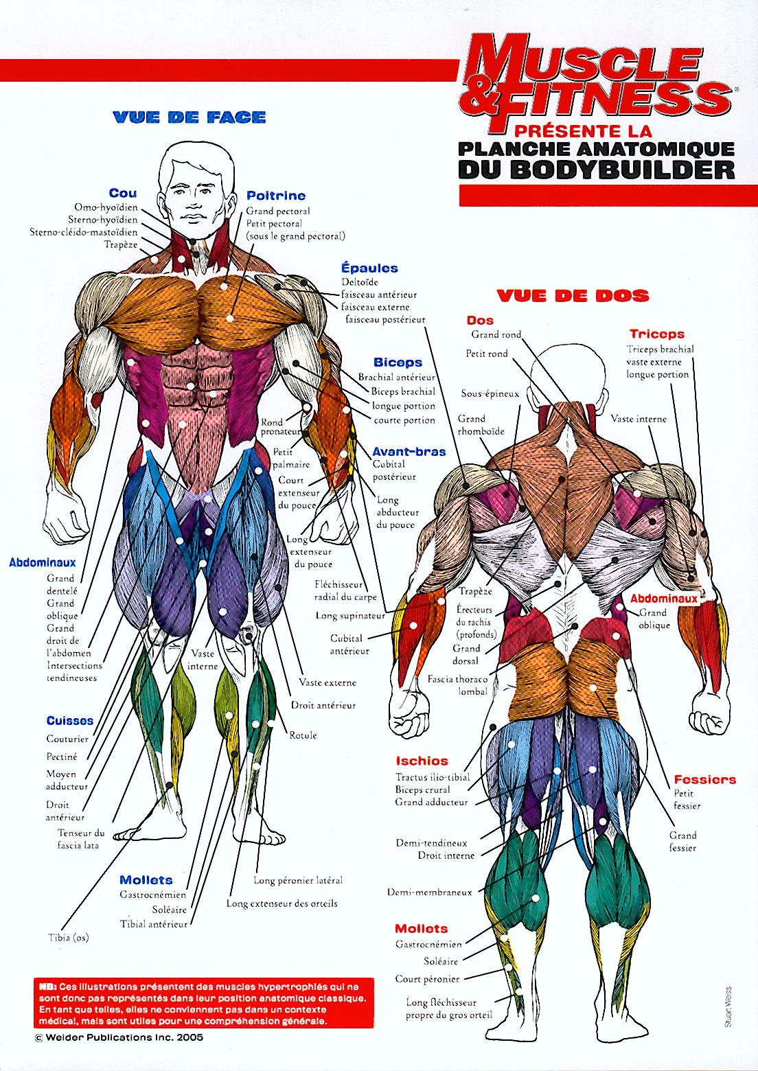 Schéma anatomie corps humain exercice